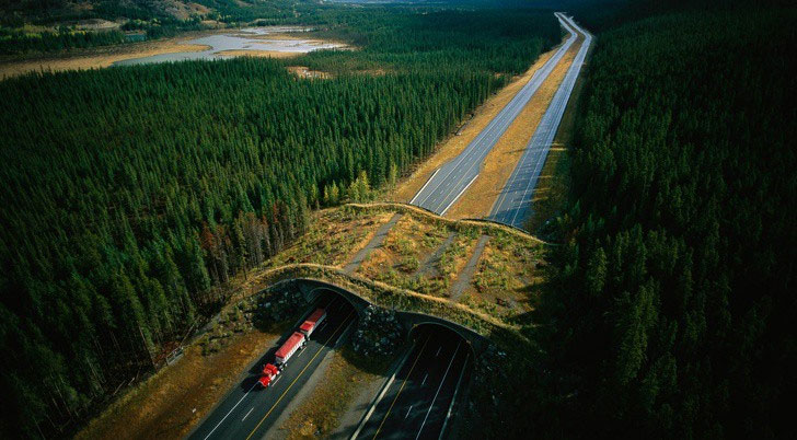Đường hầm bảo vệ động vật hoang dã