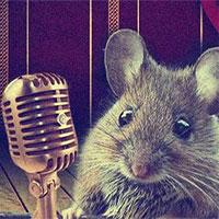 """Khoa học lý giải cách loài chuột """"cưa gái"""": Hát!"""