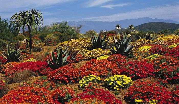 Cape Floral Kingdomcó tính đa dạng và đặc hữu cực kỳ cao.