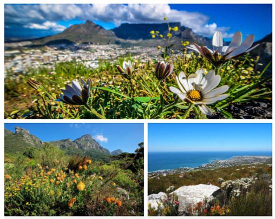 Vương quốc hoa Cape Floral