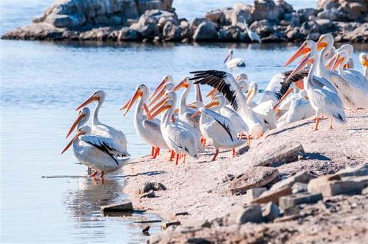 Cư dân duy nhất trên hòn đảo kỳ lạ là các loài chim.