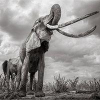 """Những hình ảnh cuối cùng về con """"voi nữ hoàng"""" của Kenya"""