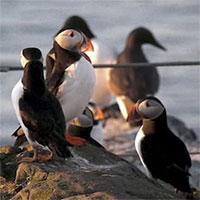 """Hòn đảo có loài chim vừa trở về từ """"cõi chết"""" khiến giới khoa học vui mừng khôn xiết"""