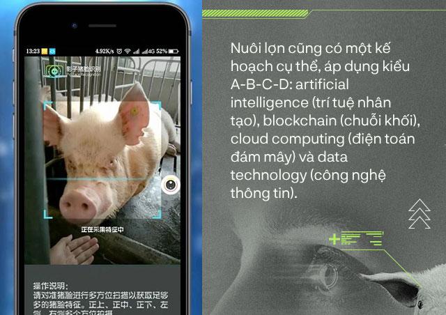 Nhận diện lợn cũng giống cách nhận diện người