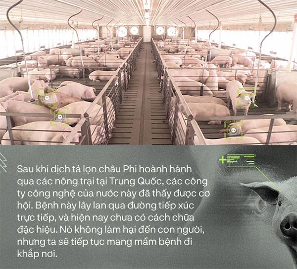 Chăn nuôi lợn thời 4.0