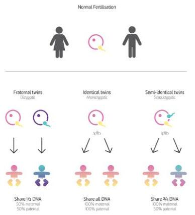 Cặp sinh đôi thể cực này có chung 100% vật liệu di truyền của mẹ và 78% vật liệu di truyền của cha.