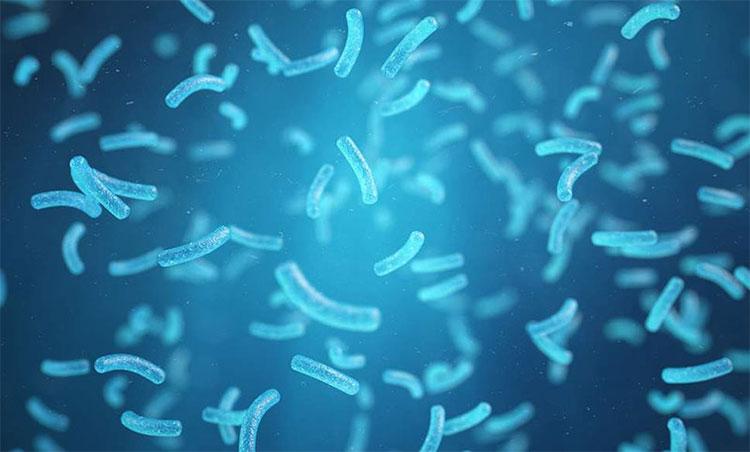 """Loại vi khuẩn được kỳ vọng là """"vị cứu tinh"""" của Trái Đất."""