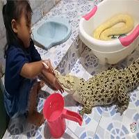 Video: Hết hồn cảnh bé gái ngồi đánh răng cho cá sấu