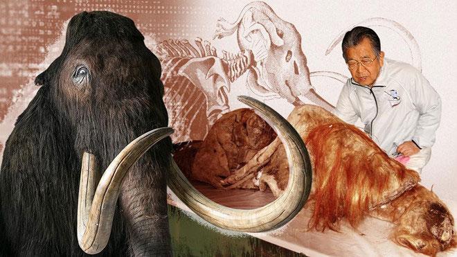 Ở tuổi 90, nhà khoa học người Nhật Akira Iritani vẫn nỗ lực hồi sinh loài voi ma mút lông đã tuyệt chủng.