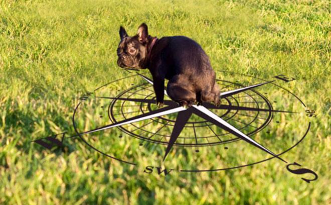Khi từ trường ổn định (thường là sau khi hoàng hôn buông xuống), chó sẽ thích hướng mặt về hướng Bắc.