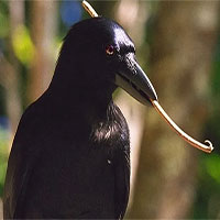 """Thế giới động vật và những """"Fun Facts"""" sẽ khiến chúng ta phải kinh ngạc!"""