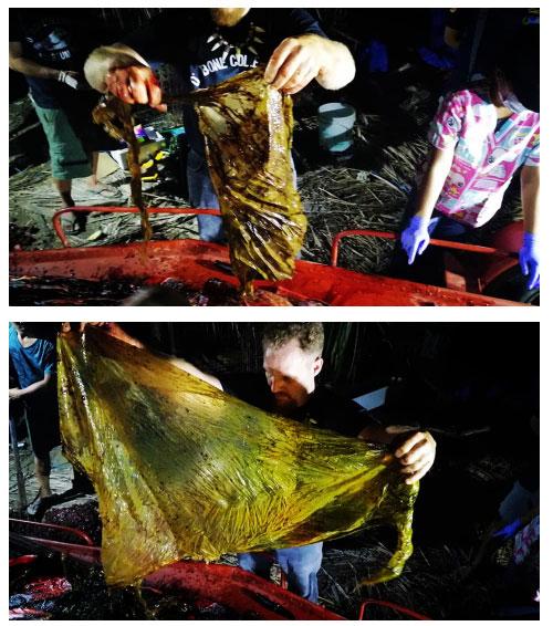 Các chuyên gia tìm thấy nhiều rác thải nhựa trong bụng cá voi.