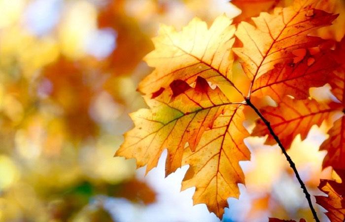 Tiết Thu phân là quãng thời gian giữa mùa thu.