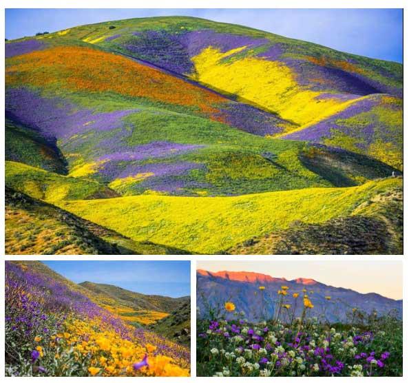 Phóng tầm mắt nhìn ra xa, trọn khu vực đều tràn ngập hoa và hoa.