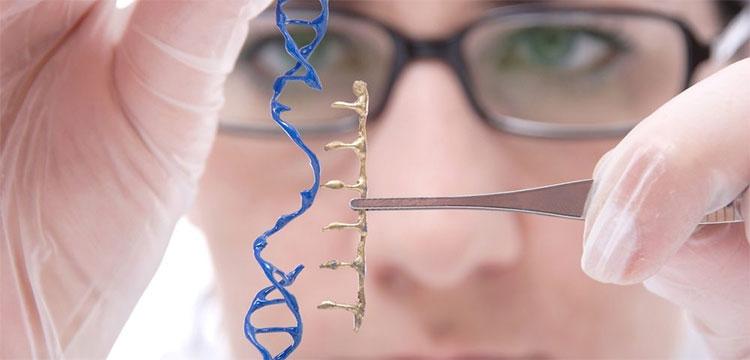 """Các nhà nghiên cứubổ sung một gene """"sửa chữa"""" vào cơ thể bệnh nhân bằng cách đặt gene này vào trong một loại virus."""