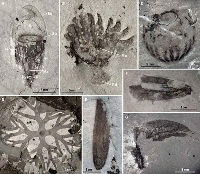 Các mẫu hoá thạch mới được các nhà khảo cổ học phát hiện tại Trung Quốc.