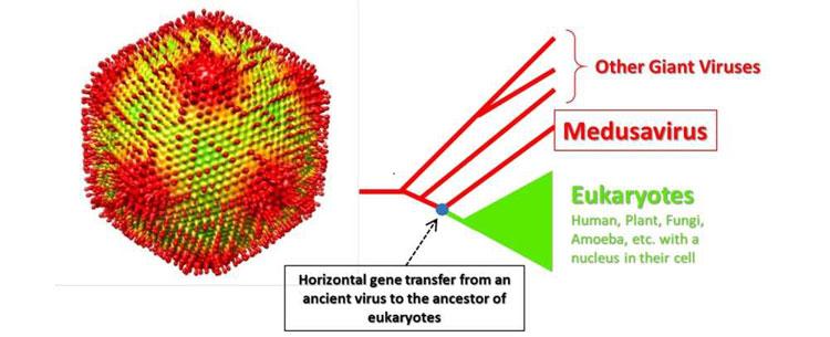 Medusavirus