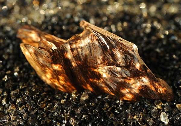 Hương trầm bắt đầu phổ biến rộng rãi trong giới nước hoa cách đây khoảng 20 năm trở lại.