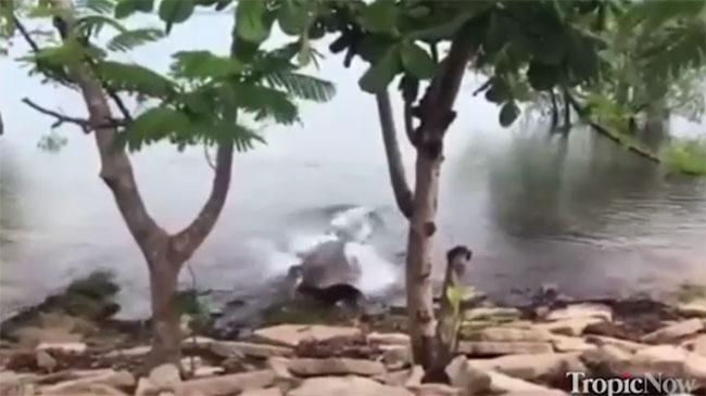 Cá sấu tấn công chó