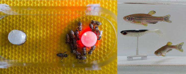 Thí nghiệm giúp các nhà khoa học có thể thống kê toán học các hoạt động của một số loài động vật