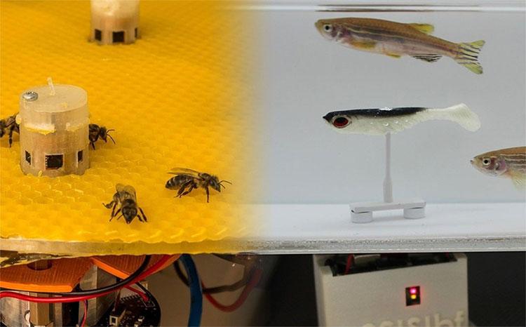 Những robot giúp kết nối bầy ong và đàn cá
