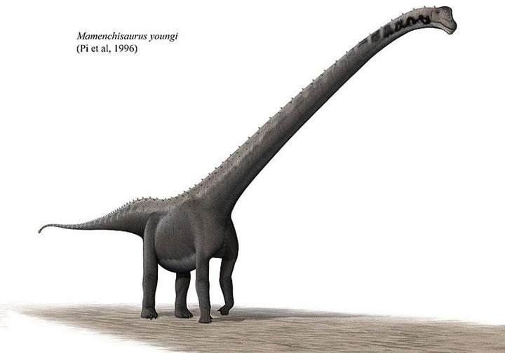 Khủng long Mamenchisaurus có cái cổ kéo dài hơn 10 mét.