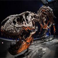 Hóa thạch khủng long bạo chúa lớn nhất