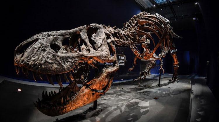 Bộ xương sẽ sớm được trưng bày tại Bảo tàng Hoàng gia Saskatchewan.