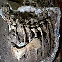 Phát hiện hóa thạch khủng long chân chim mới cách đây 86 triệu năm