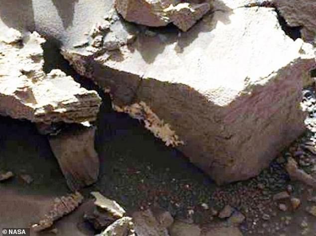 Các nhà khoa học tin rằng các sinh vật đã mọc lên khỏi bề mặt cằn cỗi của sao Hỏa chỉ trong 3 ngày.