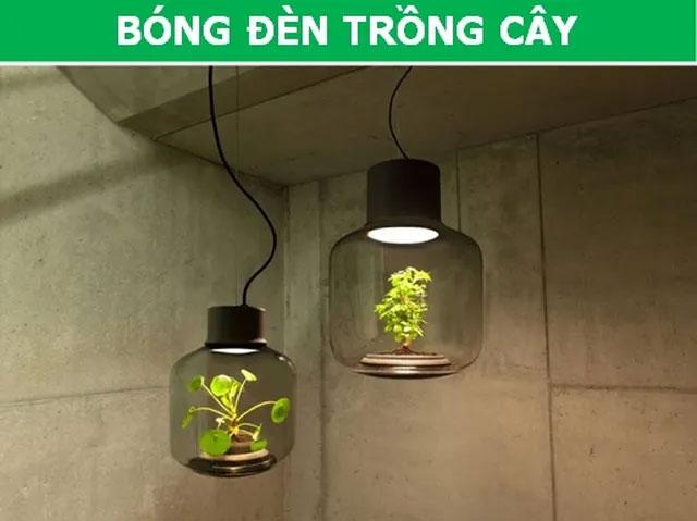 Bóng đèn trồng cây