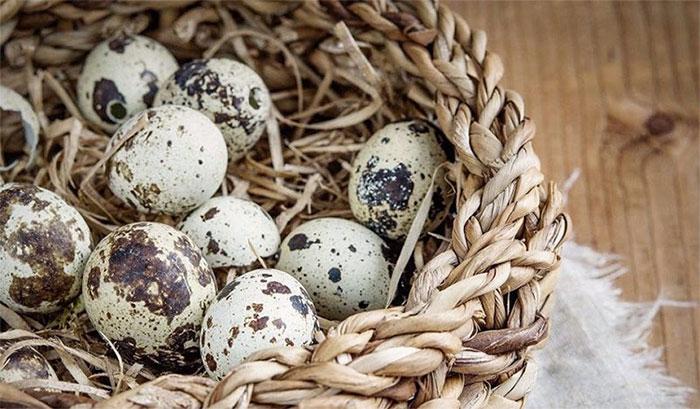Trứng cút được xem là 'thuốc bổ não' do chúng chứa hàm lượng vitamin D phong phú