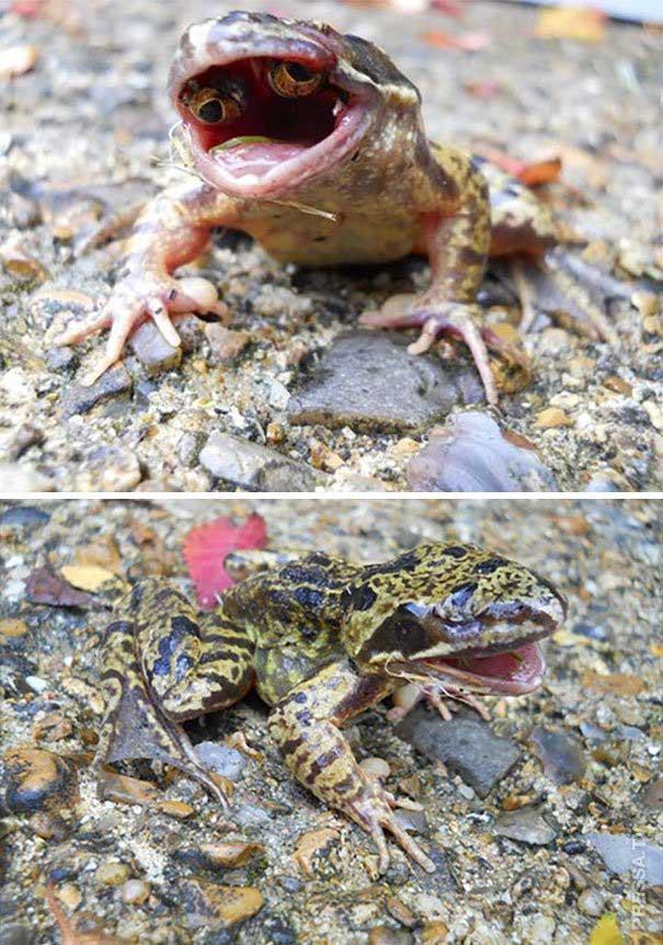 """Con ếch này có mắt """"mọc"""" trong miệng, và đây là kết quả của đại đột biến."""