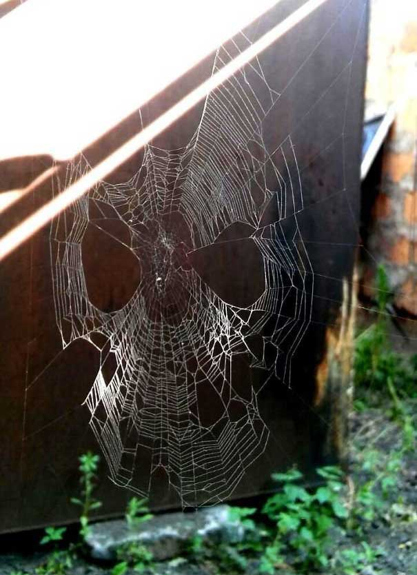 Một chiếc mạng nhện trông đầy vẻ đe dọa.