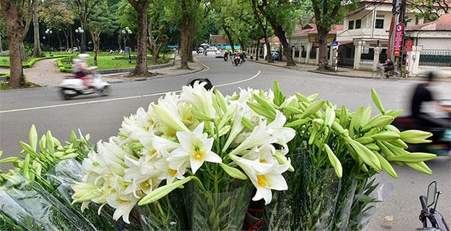 Những gánh hàng hoa loa kèn xuất hiện trên khắp các con đường, ngõ ngách của Thủ đô.