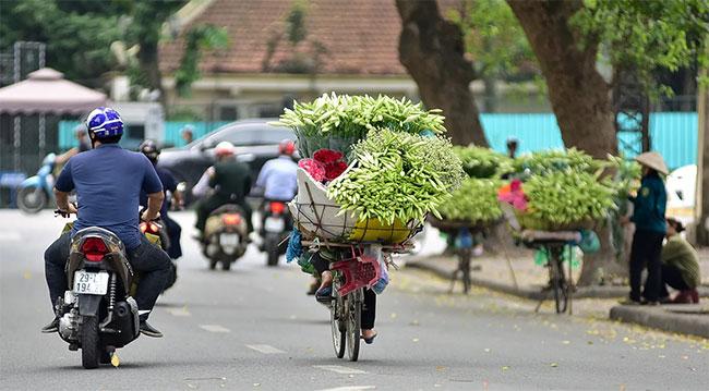 """Loa kèn không phải giống hoa khó trồng khó chăm sóc nhưng cũng khá """"nhạy cảm""""."""