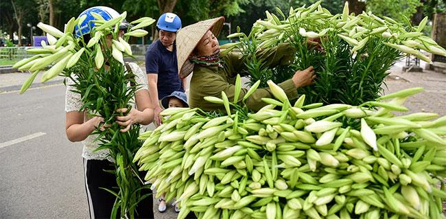 Thời điểm hiện tại, hoa loa kèn có giá dao động từ 35.000 – 50.000/bó.