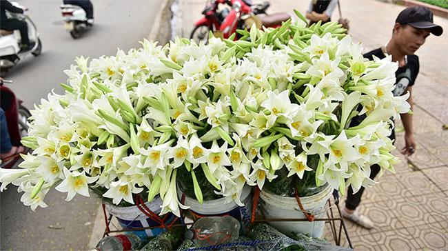 Hoa loa kèn (hay huệ tây, ở Đà Lạt gọi là hoa Lys)