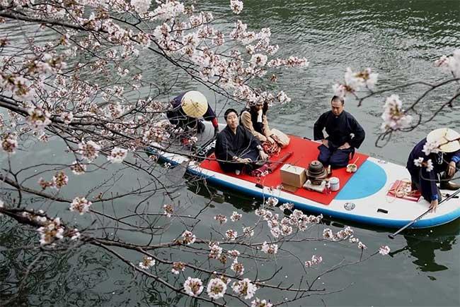 Vừa uống trà đạo vừa ngắm hoa anh đào ở Yokohama
