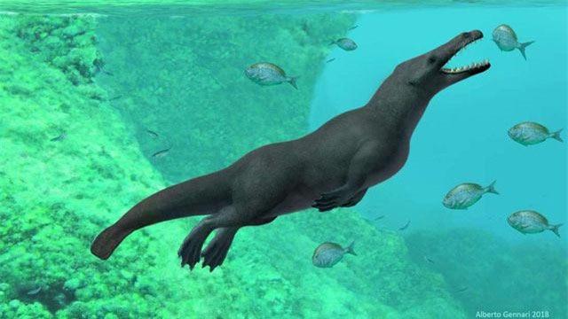 Hình ảnh mô phỏng lại loài cá voi cổ đại có đặc điểm khá đặc biệt mới phát hiện hoá thạch ở Peru