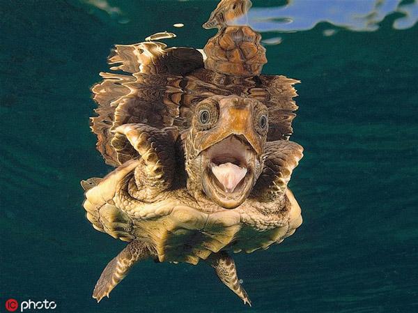 """Vừa lặn xuống nước đã thấy nhiếp ảnh gia """"phục kích"""", rùa biển hốt hoảng trợn mắt há mồm vì quá ngạc nhiên"""