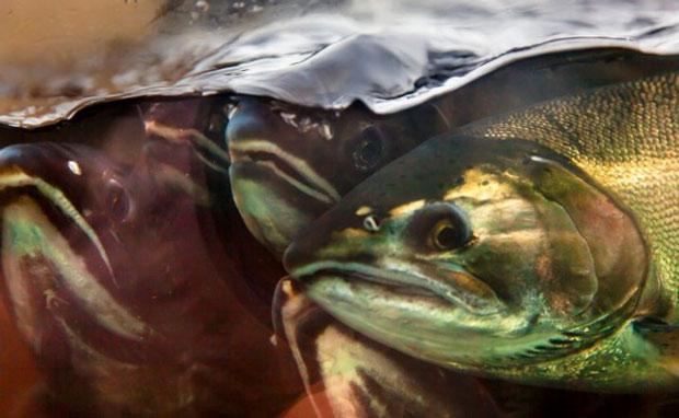 """Các hóa chất con người thải xuống biển đang vô tình làm biến đổi """"hành vi"""" của loài cá"""