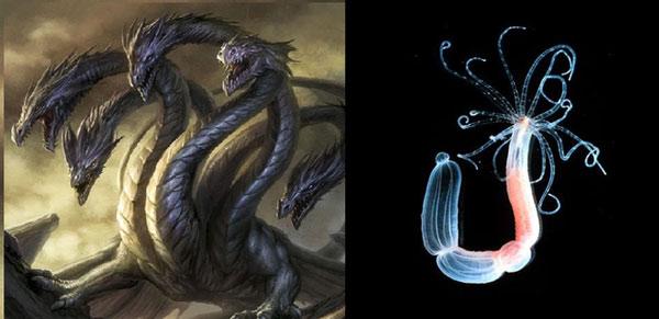 Quái vật Hydra trong thần thoại Hy Lạp (trái) và thủy tức Hydra (phải): Trông cũng khá giống nhau nhỉ?