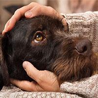 7 căn bệnh nguy hiểm bạn có thể lây từ chó