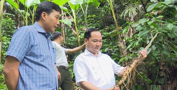 Đoàn khảo sát thực tế tại khu vực Trạm Quản lý, bảo vệ rừng Thung khiển.