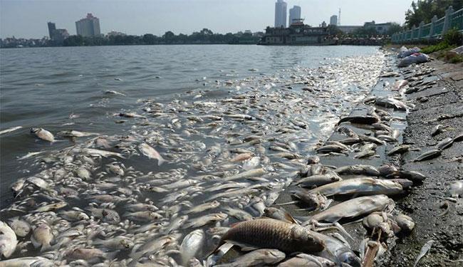 Cá bị ô nhiễm xâm nhập cơ thể