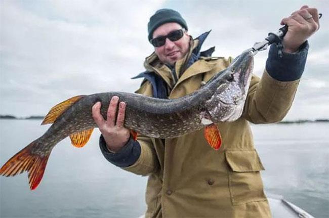 Cá được đánh bắt ở nơi hoang dã