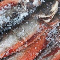 6 loại cá có cho tiền cũng đừng vội ăn ngay kẻo bệnh tật kéo đến, có cả ung thư