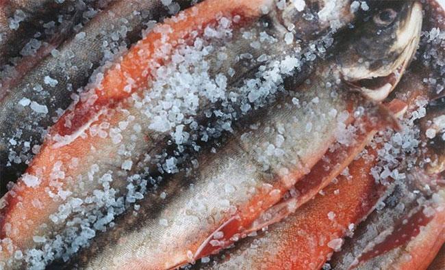 6 loại cá không nên ăn kẻo có thể mắc bệnh