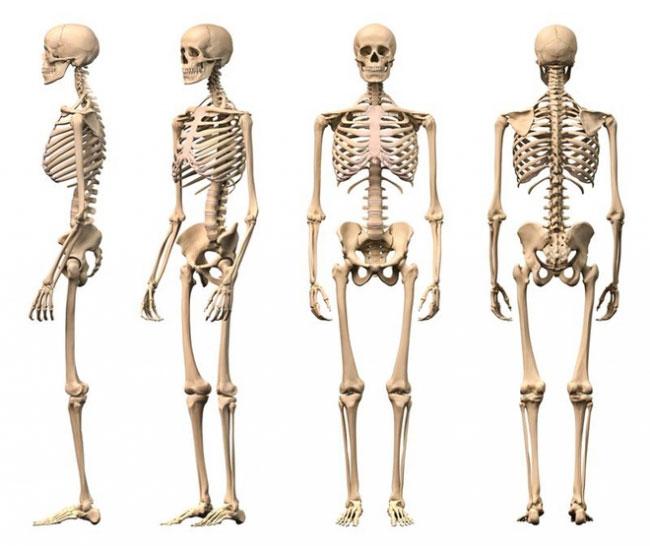 Một phần tư xương cơ thể người nằm ở dưới bàn chân